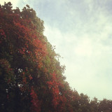 Last one! Yes! #tree #trees #black #and #white #autumn #theme #blue #sky #cloud #clouds #sun #shine #bright #light #park #leaves #branches #live #love #laugh #red #redbridge #london #home #red #green