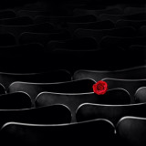 The Rose in the Theater...