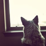 Yuki's never been able to watch cars go by. He's so fascinated!