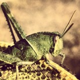 Hello, grasshopper!  It's nice to see who is inhabiting our outside space!