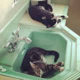 new chill spot #kitties #oakland