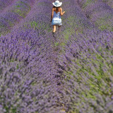 Woman walking through lavender