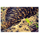 The bum of an echidna, as this is all he/she would let me photograph :D #nature #echidna #tassie #instatassie #discovertasmania #instag_contest_ #amature_united #aussiephotos #tasmania #16x9rebels #16x9captures #snapsee #nature_perfection #animal_capture #native #nativeanimals