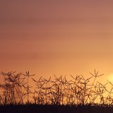Grass at the top of the hill at sunset