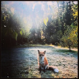 Beautiful sunrise in the MT mountains.  #fox #ilovebacon #sunrise #francis #whatdoesthefoxsay #nature