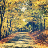 I miss driving this road everyday..however by no means am i saying i miss Madonna..fuck that. #trees #leaves #road #fall #country #Pennsylvania
