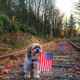 Veterans Day  - Thank you for your service and sacrifice.  #veteransday #petsofinstagram