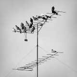 Pigeons on a TV antenna - popular kids on the top level ;)