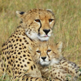 Malaika and her cub spend some time together just before sunset, here in Kenya's jewel: the Masia Mara.
