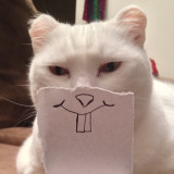 Tinkerbell , our deaf white cat and a paper smile!