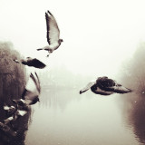 Fly Bleak Pigeons of the Winter, Fly. A cold foggy day on the River Thames. Pigeons take flight and dance into the sky. Part of an everyday life lived on this ancient waterway.