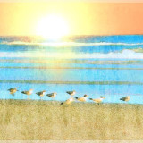 Birds along the shoreline at Jacksonville Beach Florida. Used iColorama filters to create