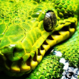Close-up view of snake