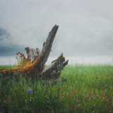 Driftwood on a grassy land