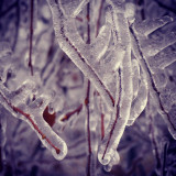 Frozen icicle