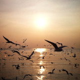 seagull fly in the evening ,Bangpu Thailand