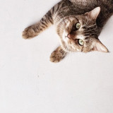 a cat on white background
