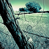 Wooden post with barbed wire in farmland