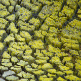 Dry edges of the Devil's Bath, an eruption crater lake, colored yellow by sulfur. Wai-O-Tapu Thermal Wonderland near Rotorua, New Zealand.