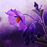 Painting of purple flower