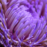Extreme close up of purple flower