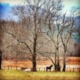 Cade's Cove in The Great Smokey Mountains