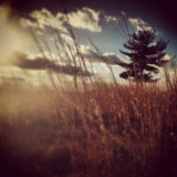 Dried grass in forest, soft focus