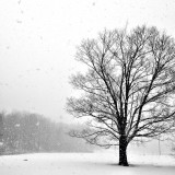 Leafless tree standing in blizzard