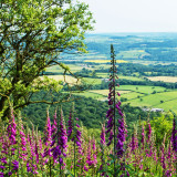 The view from the top of the Wrekin, Telford, Shropshire
