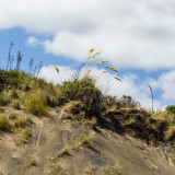 Dunes on Bethells (Te Henga) beach, west coast, North Island, New Zealand.