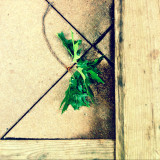 Twig with leaves on tiled floor