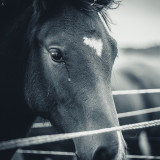 A beautiful horse in a small village in Germany