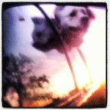 #dog #sunset #pretty #cool #fun #air #car #window #mirror #wind