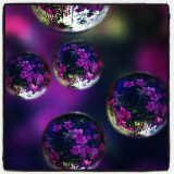 Spheres with flowers