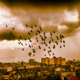Flock of birds flying over a city