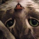 close up of kitty nose, eyes whiskers