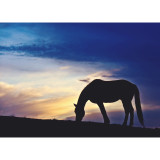 Silhouette of horse in pasture