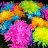 Flowers are the sweetest things God ever made, and forgot to put a soul into.  ~Henry Beecher, Life Thoughts, 1858
