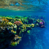 Snorkeling in the Red Sea. Marsa Alam