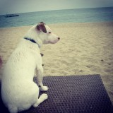 My dog relax on the beach