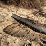 Piece of wood lying in sand