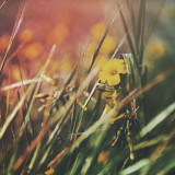 Yellow flower growing in grass