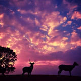 View of deer and doe silhouettes