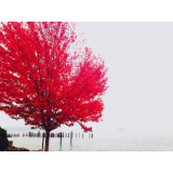 Red autumn tree at lakeside