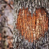 Love heart on a tree
