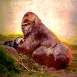 Gorilla sitting on grass