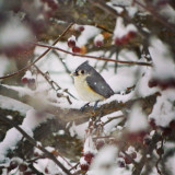 Bird in the snow storm eating from the feeder, bird in a tree