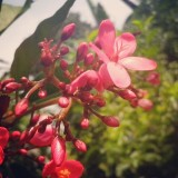 #Morning #Daylight #red #litlleFlower #LenovoA800