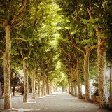 Beautiful pathway of nature in Coimbra, Portugal.