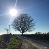 Tree growing by country road